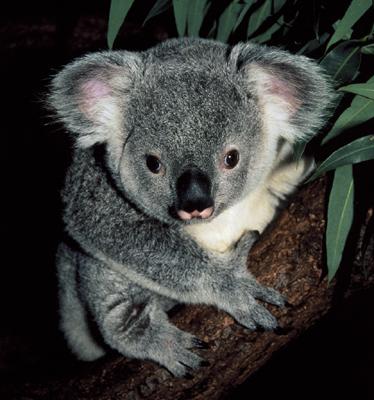 ubuntu karmic koala 9.10
