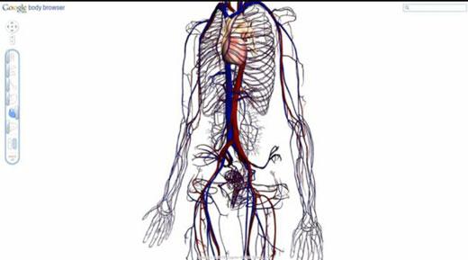 人体构造固)�_谷歌研制3d人体构造浏览器 可清晰观看人体内部